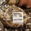 le giare branza maturata in frunze maslini